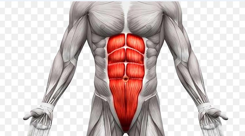 For men and women how long abdominal muscles need to appear