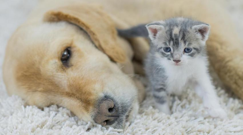 How to know if your dog or cat is sick Signs of a Sick Cat or Dog