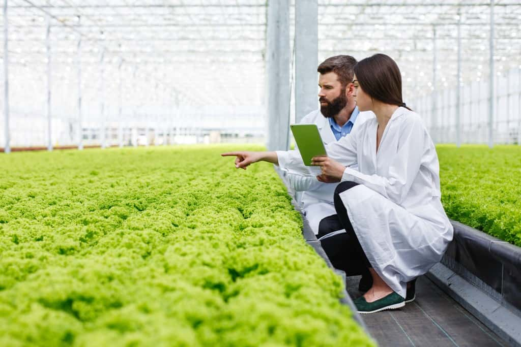 Study agriculture and its fields in Australia