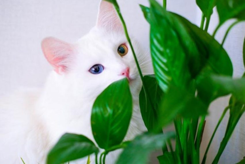 Who live with Cats Most Frequent Common Mistakes made by new cat owners